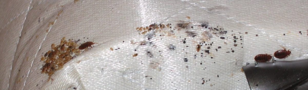 Eradicating Bed Bugs from your Premises